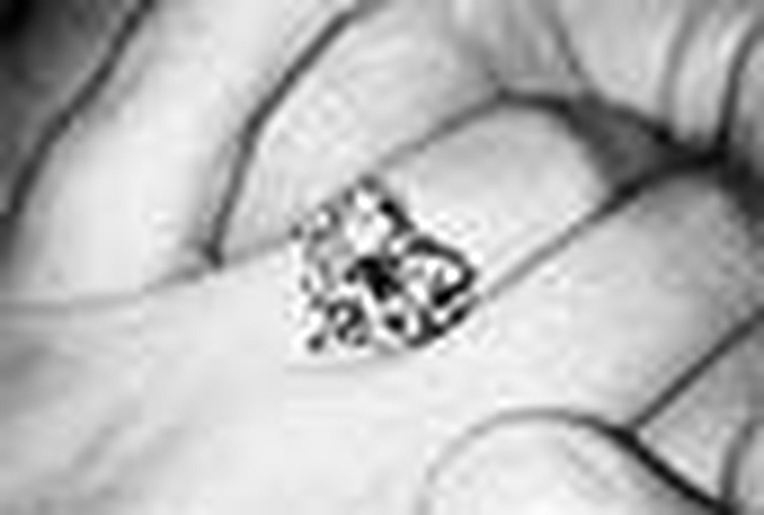 Lady Gaga engagement ring NL