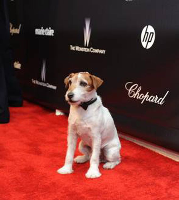 Uggie the dog from The Artist at Golden Globes