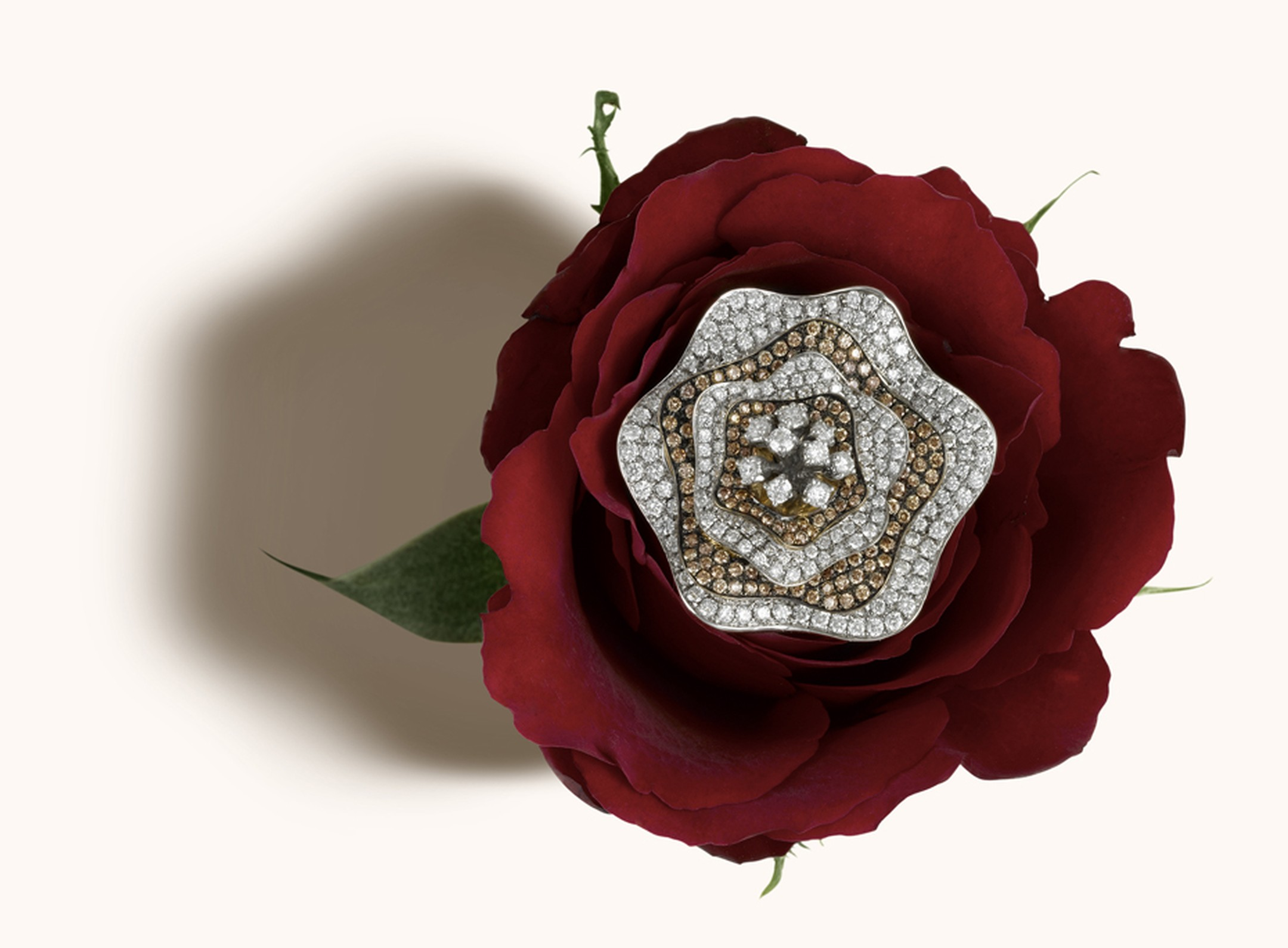 Zoya Espan~a collection exotic rose brooch with champagne and white diamond petals