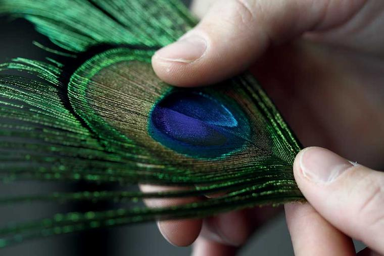 The art of plumasserie, or feather art, requires patience and dexterity.